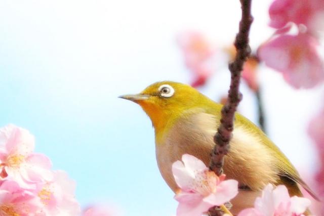 挨拶 立春